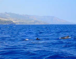 Short-finned pilot whales!